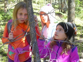 Forest Ecology web